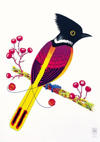 Bird Of Janta Island