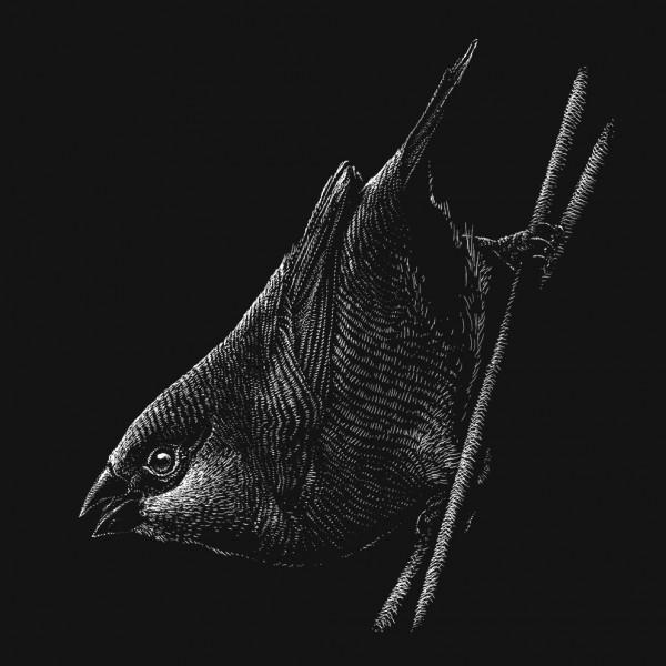 Tiny Birds Serie - Phillip Janta