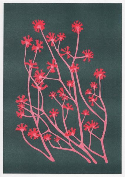 Flower – La Meteo