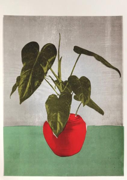 Zimmerpflanze - Olivia Pils